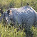 Kaziranga, le meilleur parc de l'Assam et de toute l'Inde